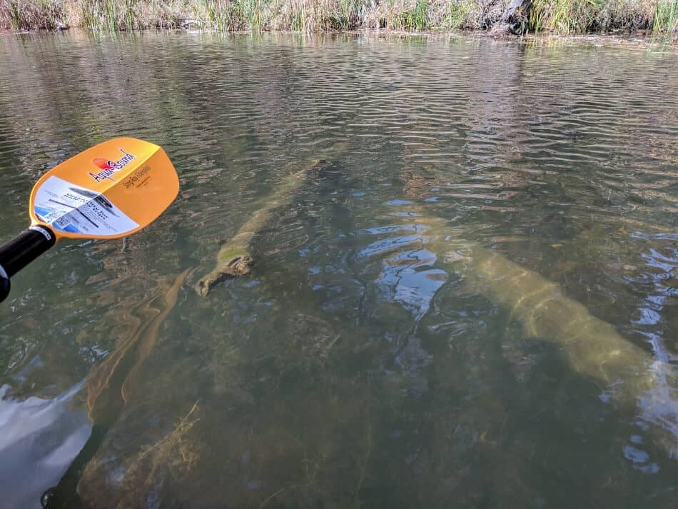 paddling on a lake that has a hidden log submerged below the surface